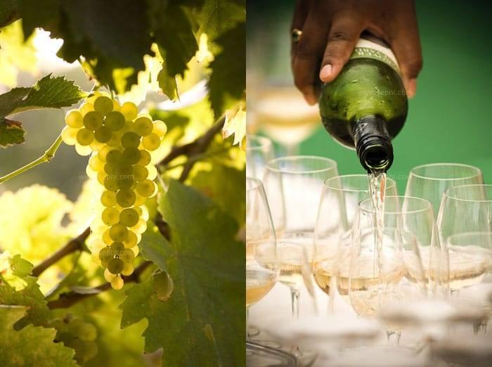 Indian_wine_grover_vineyards_01d
