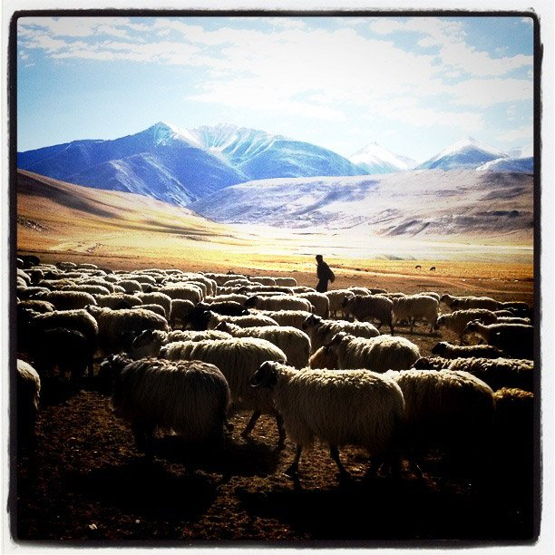 iPhone photography in Ladakh - Tsomoriri nomads